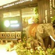 靓米泰果东南亚餐厅 九洲新世界店